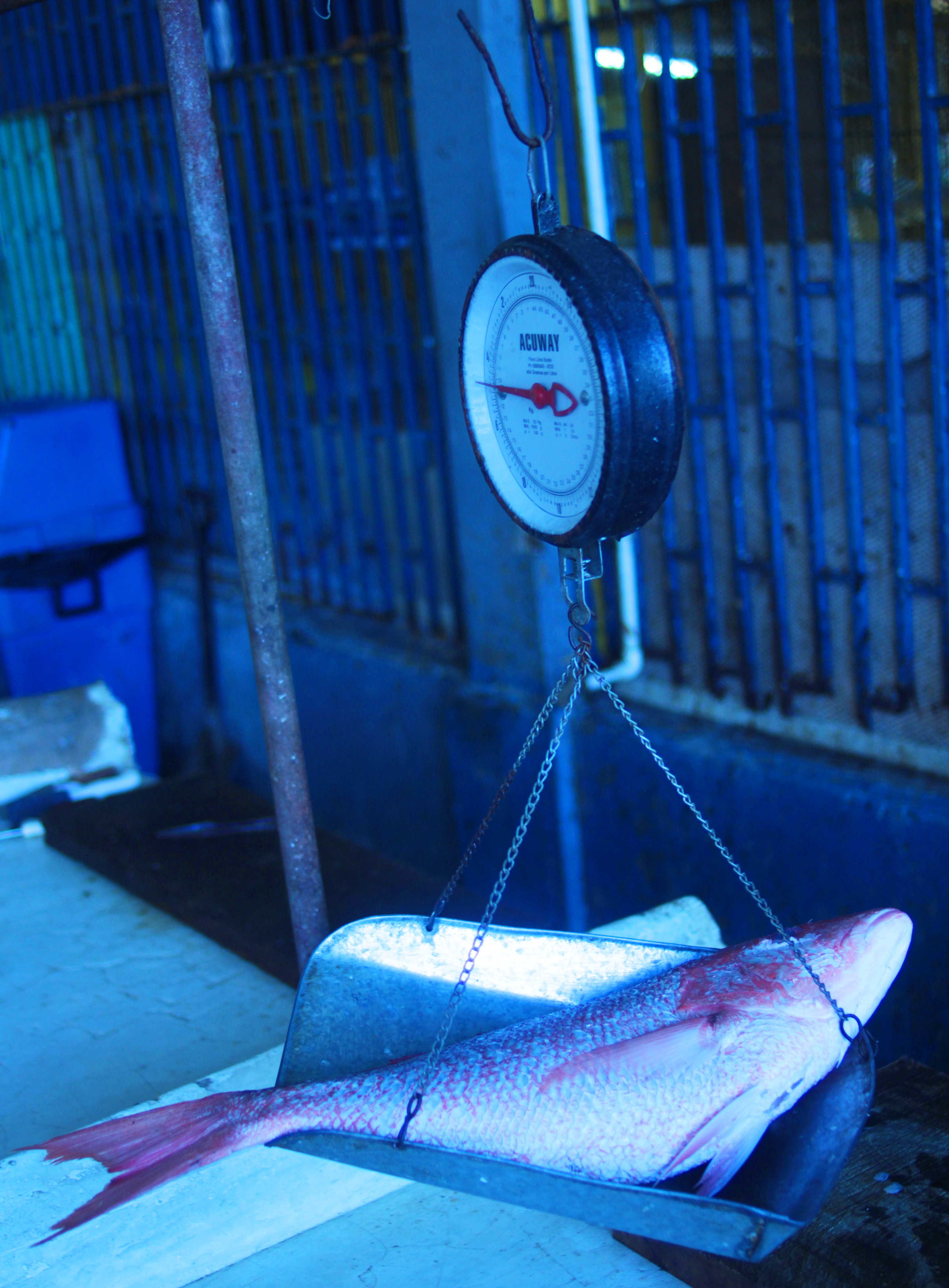 Market Scale with Red Snapper Fish